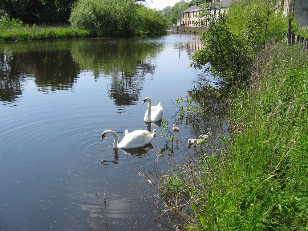 The new cygnets 2005